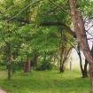 sprehod-skozi-vrt-63