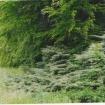 sprehod-skozi-vrt-66