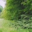 sprehod-skozi-vrt-67
