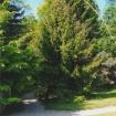 sprehod-skozi-vrt-74