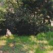 sprehod-skozi-vrt-93