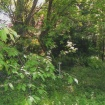 sprehod-skozi-vrt-96