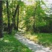 sprehod-skozi-vrt-97