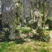 sprehod-skozi-vrt-99